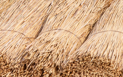 Questions to ask when buying a thatched property
